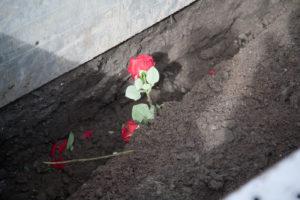anna-groot-rozen-bedekt-met-aarde-1640
